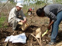 Cassava research in the field