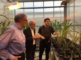 Max Cowan showing his native sorghums to Birger Møller (copenhagen) and Robert Henry (UQ)